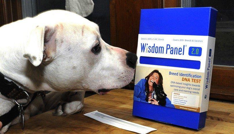 La sabiduría prueba de ADN Panel