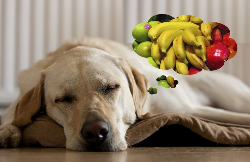 perro soñando