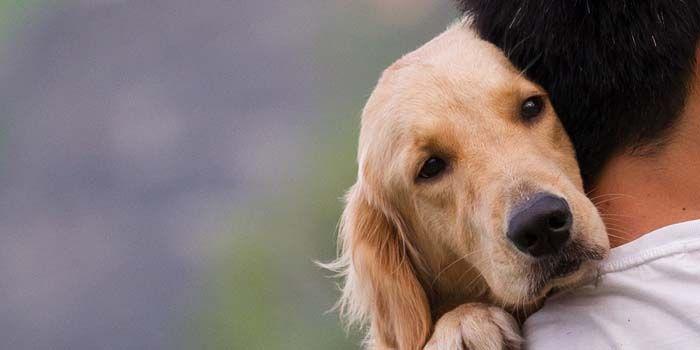 perro de mirada triste con su dueño