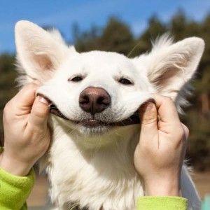 persona que hace una sonrisa de perro