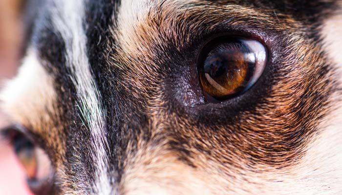 por qué los perros no son daltónicos