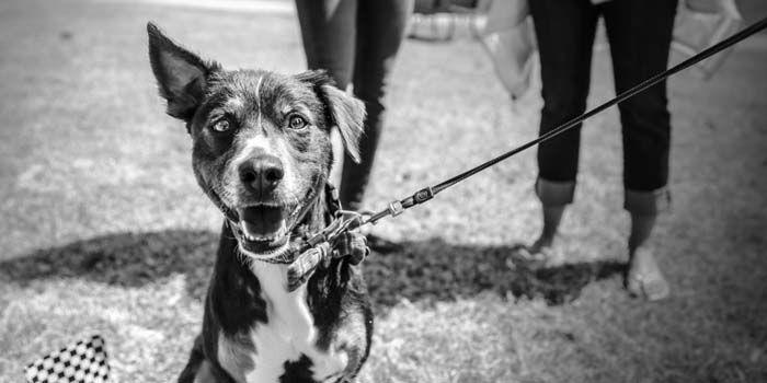 daltónicos perro negro blanco mito disipado