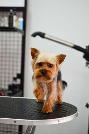 Foro de mascotas que los padres necesitan una tabla de la preparación del perro en el hogar