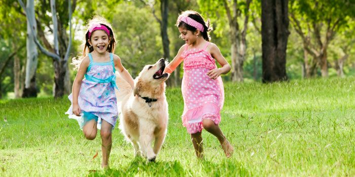¿Sus hijos saben estar cerca de los perros