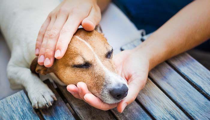 QuГ© mi perro come hierba y Alivio de estГіmago