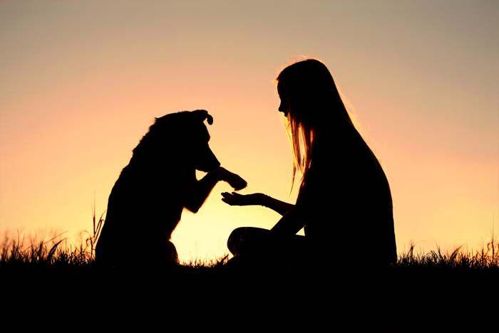 ВїMi perro me ama - CГіmo leer las emociones en los perros