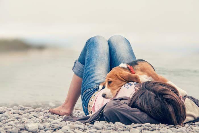 QuГ© mi perro me ama - Mostrar un poco de amor