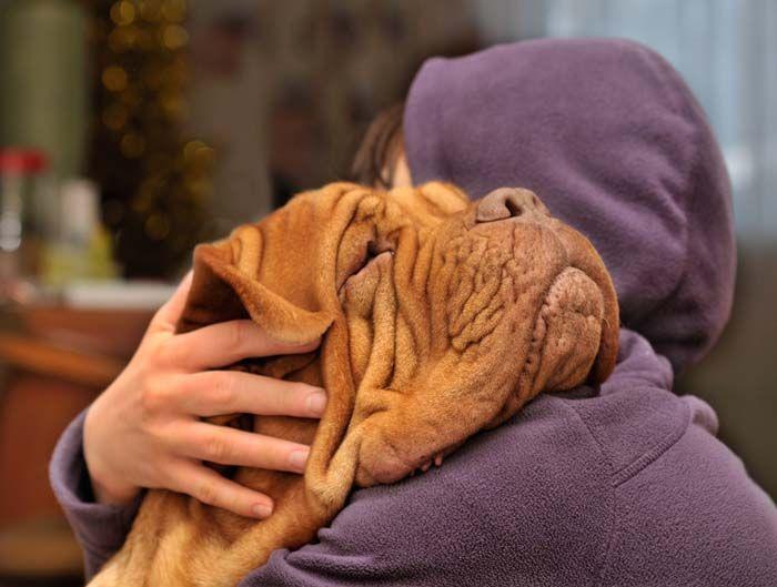 Mi perro me aman - Mitos y realidades acerca de las emociones para perros