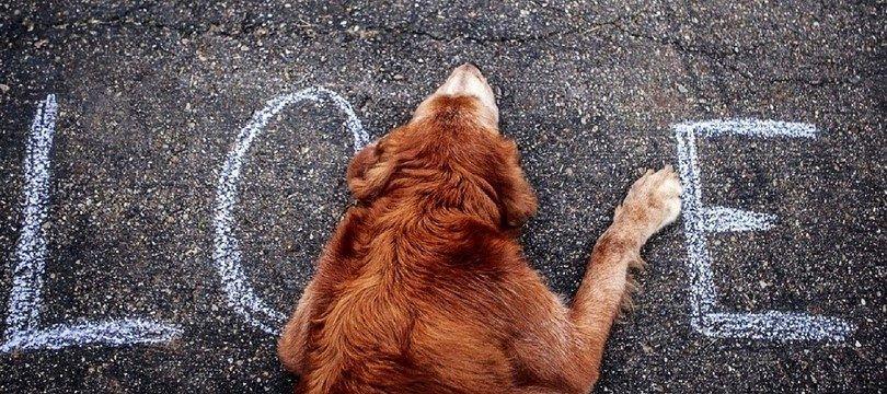 ¿Mi perro me ama? La comprensión de las emociones caninas