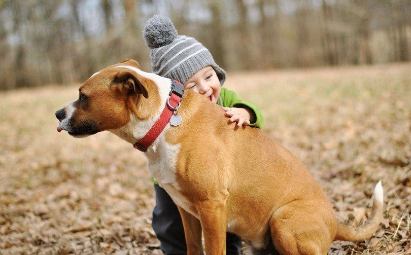 El niño y del perro