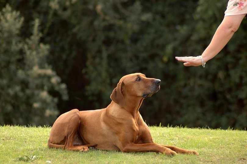 El entrenamiento de un perro