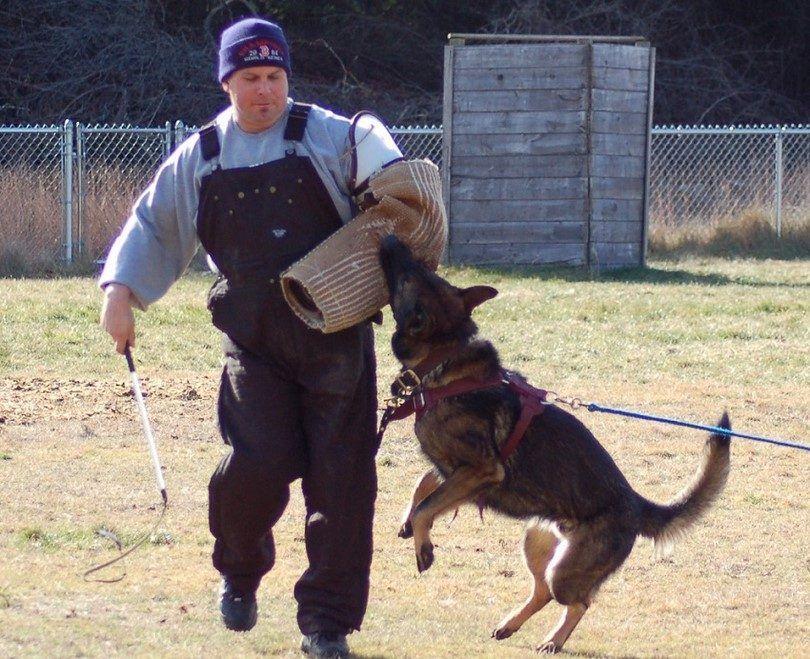 Entrenar a un perro para atacar