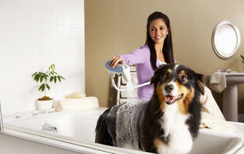 Tratamiento de la alergia del perro: mantener a su perro sano y feliz
