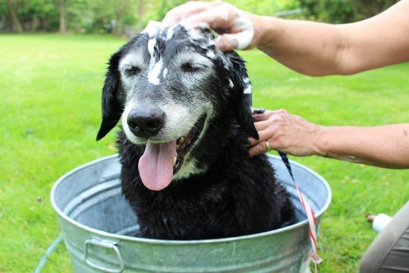 Veterinario`s Best Hypoallergenic Shampoo with Aloe Vera