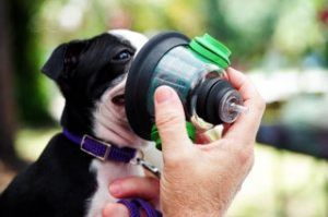 Síntomas de asma perro, tratamiento y remedios caseros naturales