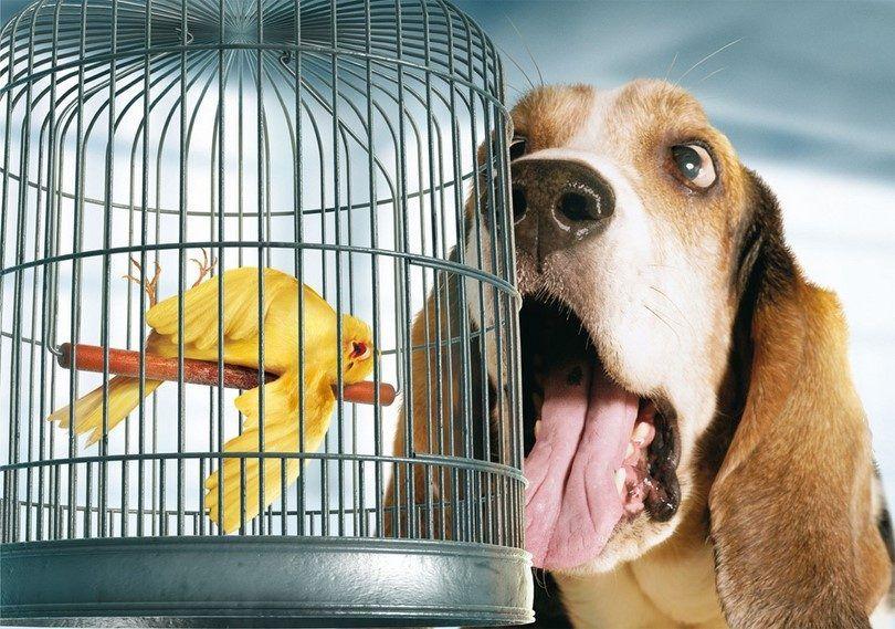 Perro cura el mal aliento: el cuidado de la salud oral de fido