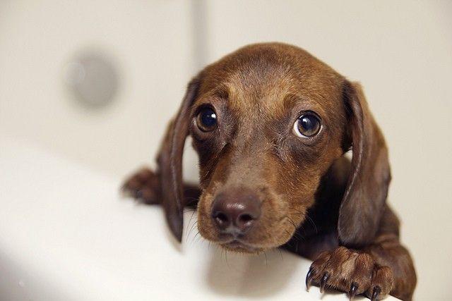 Consejos de baГ±o del perro - CГіmo dar un perro un baГ±o