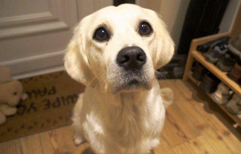 Petición del perro: métodos y mejores productos para detener este comportamiento