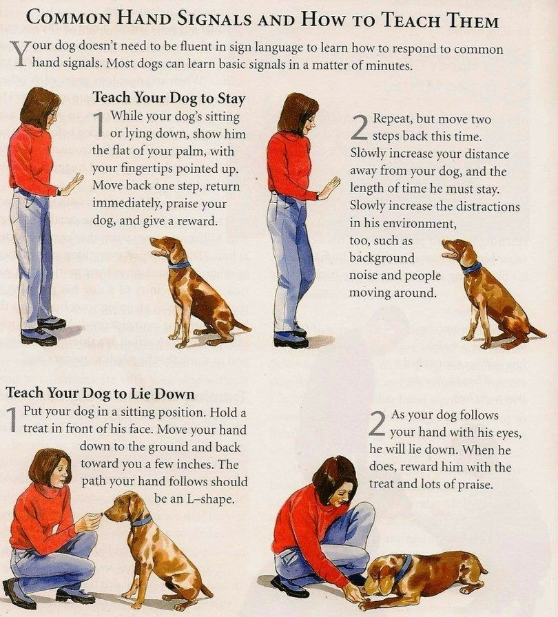 Conceptos básicos del entrenamiento del perro