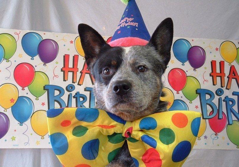 Ideas de la fiesta de cumpleaños del perro: una celebración para sus bebés