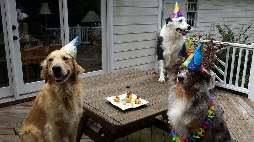 fiesta de cumpleaños y aperitivos para los perros