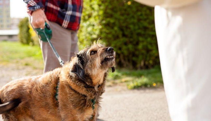 Perro pleito de la mordedura: aprender a mantenerse a salvo con el punto
