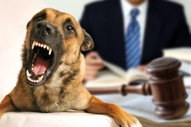 Defensas para un pleito de la mordedura de perro