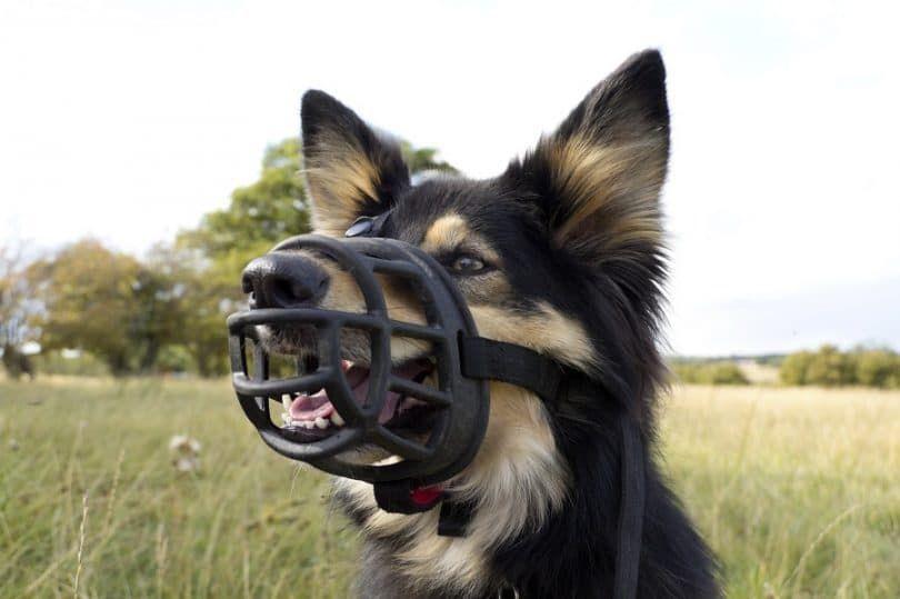 Perro debe tener bozales
