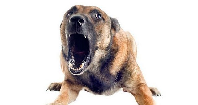 PrevenciГіn de mordeduras de perro