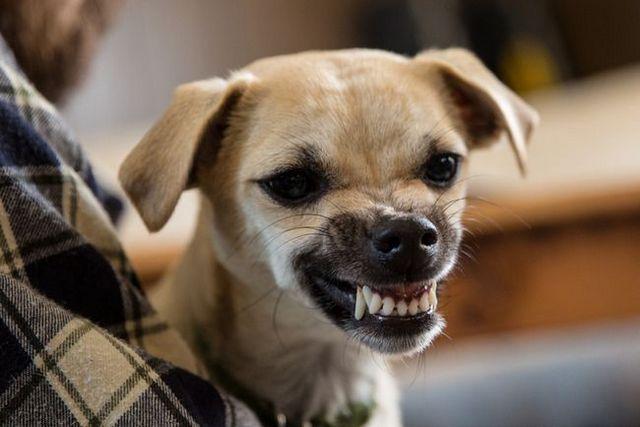 EstadГsticas de la mordedura de perro: un aГ±o a revisiГіn