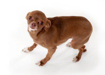 El lenguaje corporal del perro - primera parte: la postura