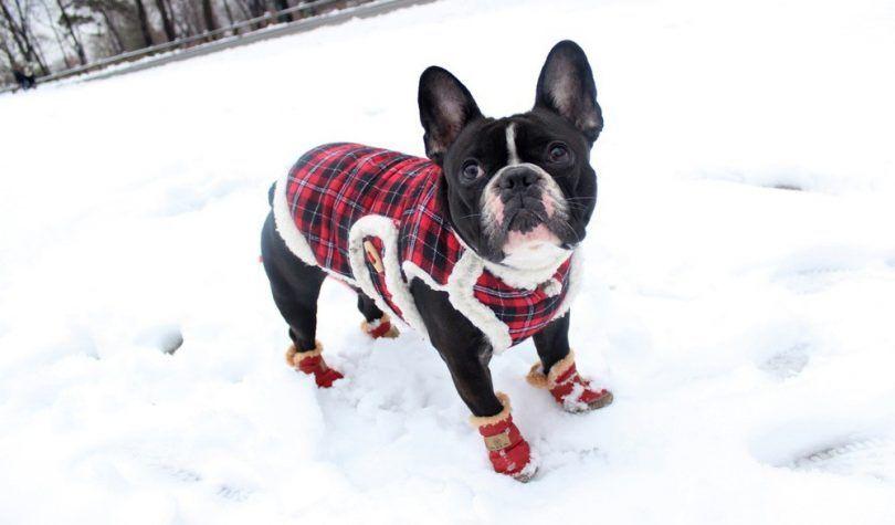 botas para la nieve para perros