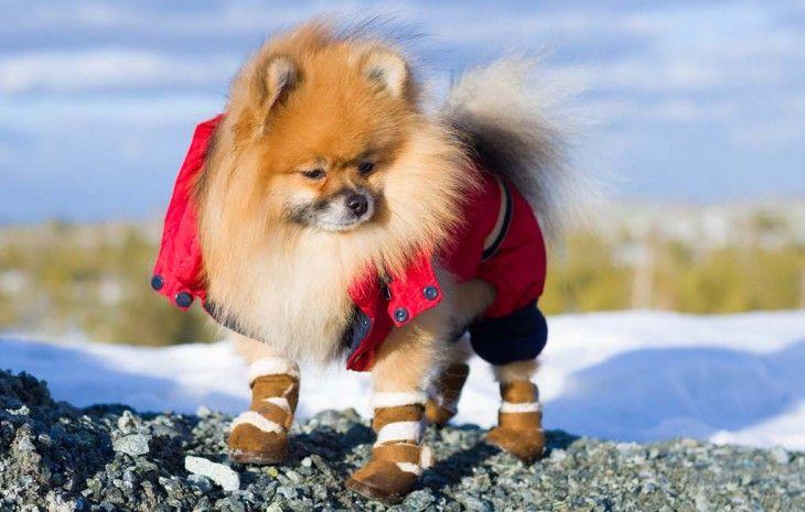 Botines del perro para la nieve