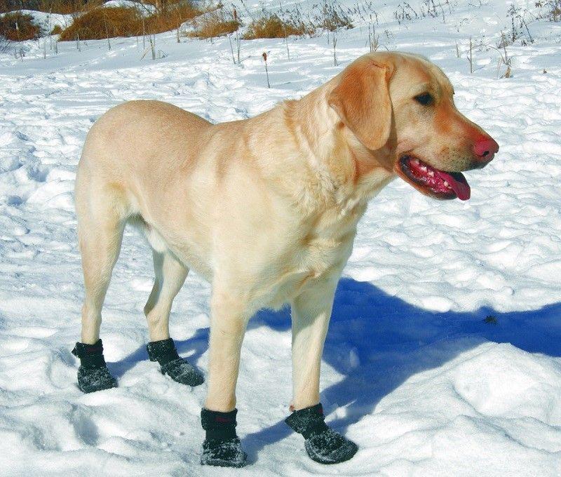 Botas en el perro en nieve