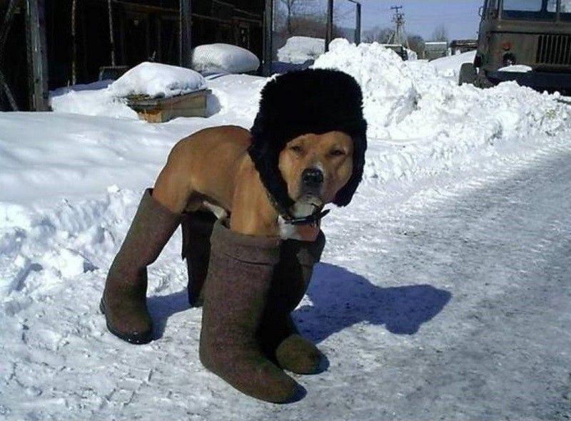 Perro con botas y sombrero
