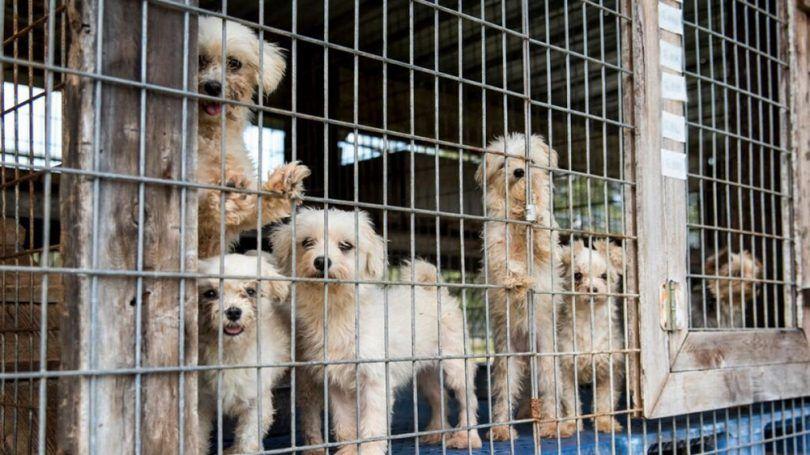 Los cachorros de perro en las fábricas