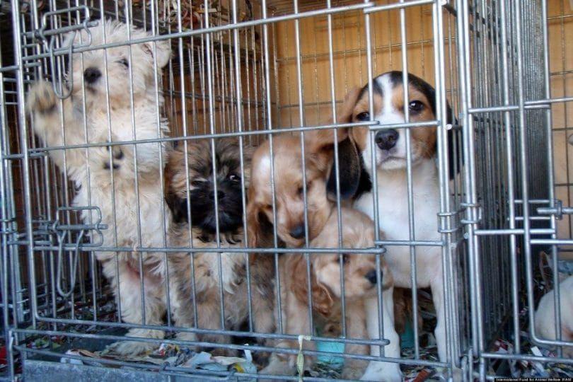 Cachorro mirando de fábricas de cachorros