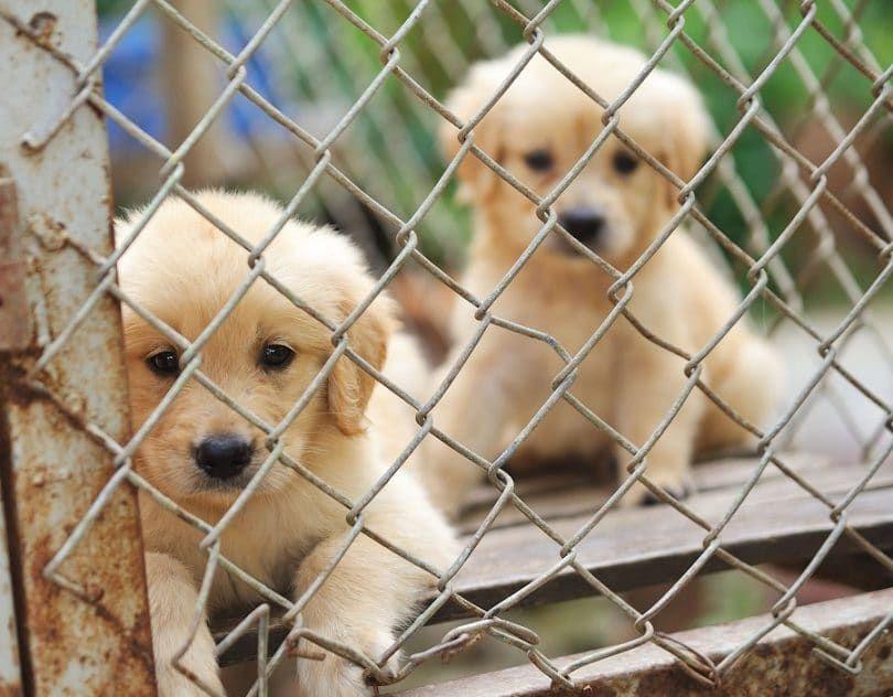 Los cachorros encerrados en la jaula