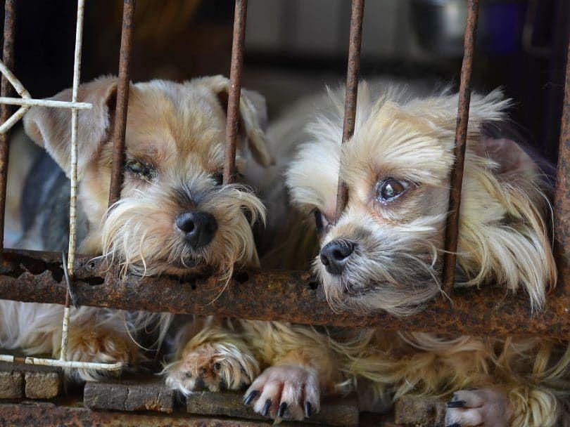 Cachorro-Molino y sin atención veterinaria