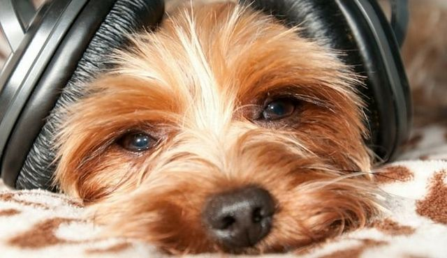 Perro música relajante: ¿realmente funciona?