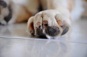 Cuidado del perro 101: Cómo preparar su perro en el hogar