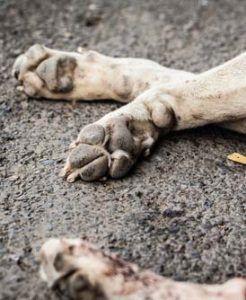 ВїQuГ© hago si mi perro muere en su casa de forma natural