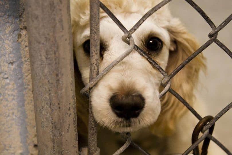 Perro en jaula