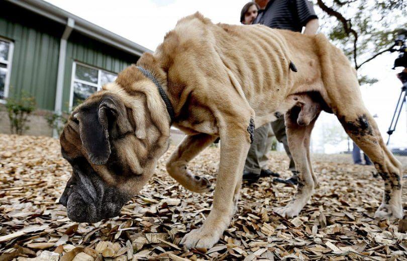 gran negligencia perro