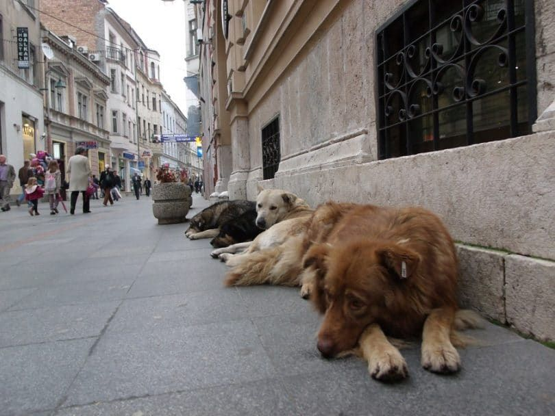Perro abandonment- perros callejeros
