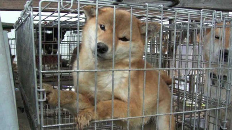 Perro crueldad por parte de las tiendas de animales