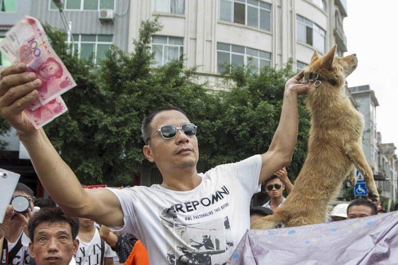 Terminar con la crueldad perro!