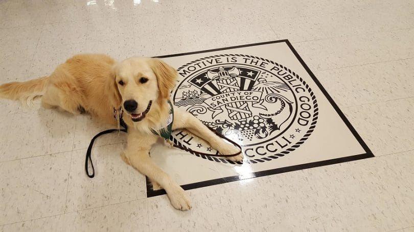 veredicto perro waithing