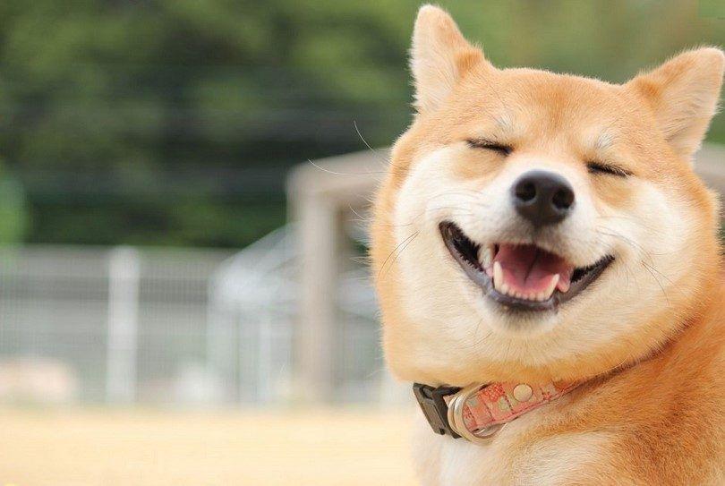 Las emociones en los perros