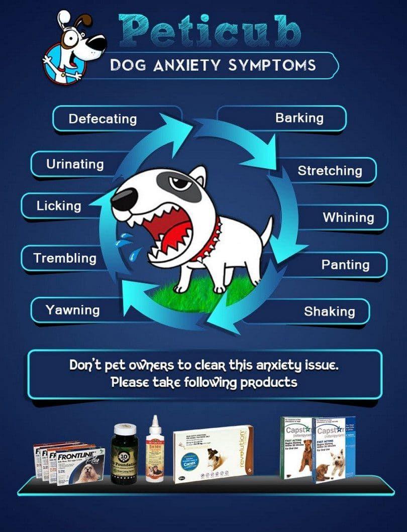 la ansiedad del perro